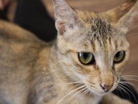 熊本の猫カフェで復興支援!「かごにゃん」でモフモフ癒やし体験