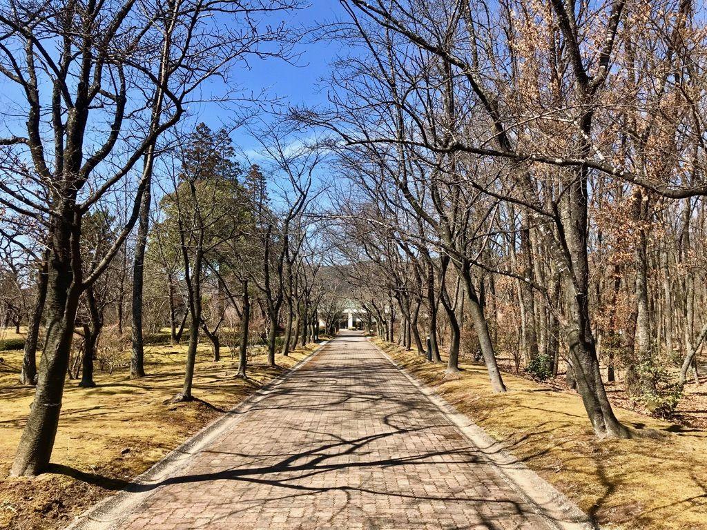 公園みたい!森の中の広大な敷地