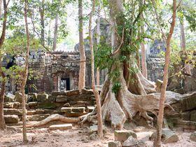 アンコール・ワット観光の穴場!「タ・ネイ」遺跡は美しき廃墟系