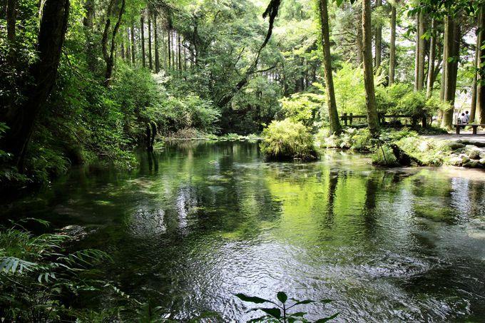 池山水源と山吹水源のお水を飲み比べ!