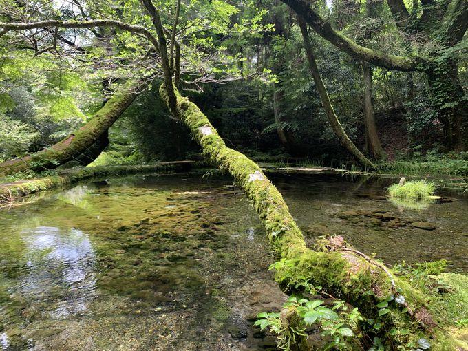 熊本の名水100選、毎分30トン
