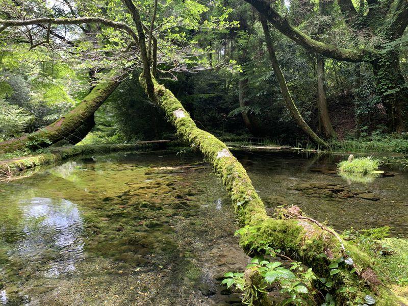 阿蘇の名水が毎分30トン!熊本・産山村「山吹水源」