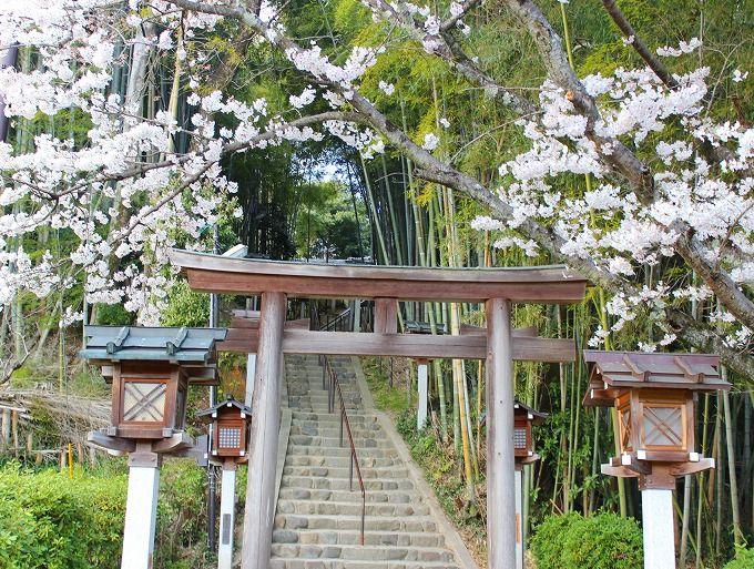 受験にご利益「久延彦神社」と桜