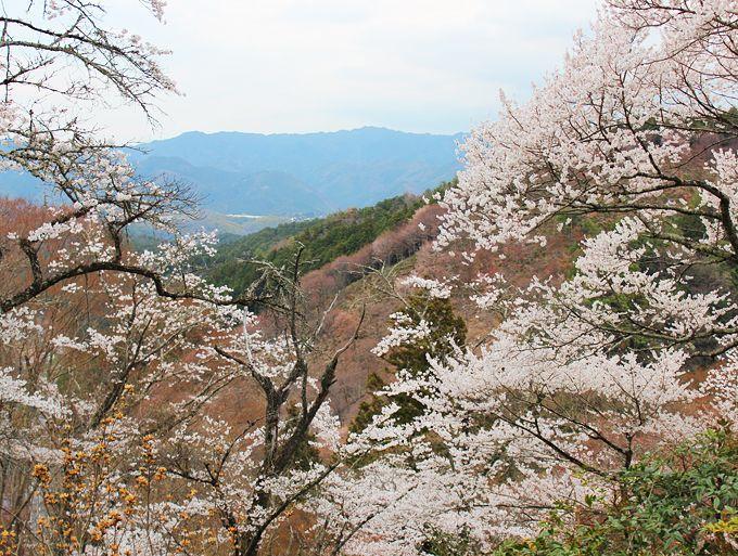 桜と信仰の吉野山