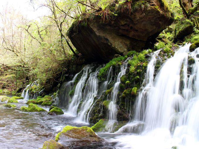 幻想的な元滝伏流水