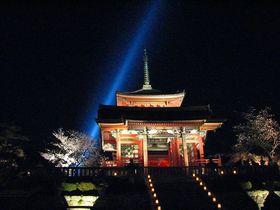 桜の季節の絢爛ライトアップ!京都「清水寺」の見所