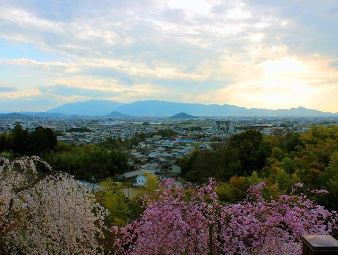 桜の絶景、大美和の杜展望台と万葉の山々