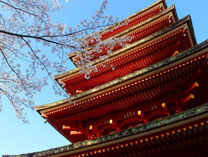 本長谷寺、五重塔から桜を仰ぎ見る参道へ