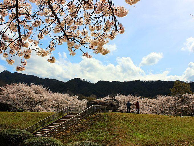 桜満開の石舞台古墳