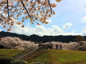 謎に包まれた巨石・奈良明日香村の「石舞台古墳」は桜の季節がオススメ!