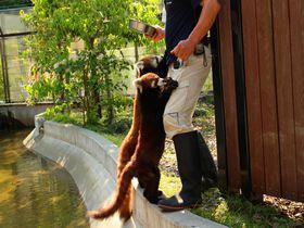 レッサーパンダに超絶メロメロ!「静岡市立 日本平動物園」は動物に近すぎ近づきすぎ!