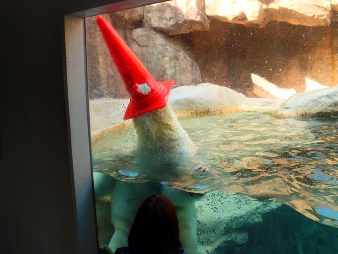 ホッキョクグマのユーモラスなポーズを楽しもう!