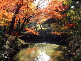 東京の紅葉名所「神宮外苑 銀杏並木」と「六義園」を比較!