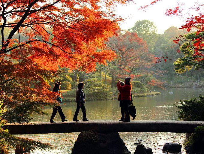 国の特別名勝「六義園」でしっとりした水辺の紅葉を楽しむ