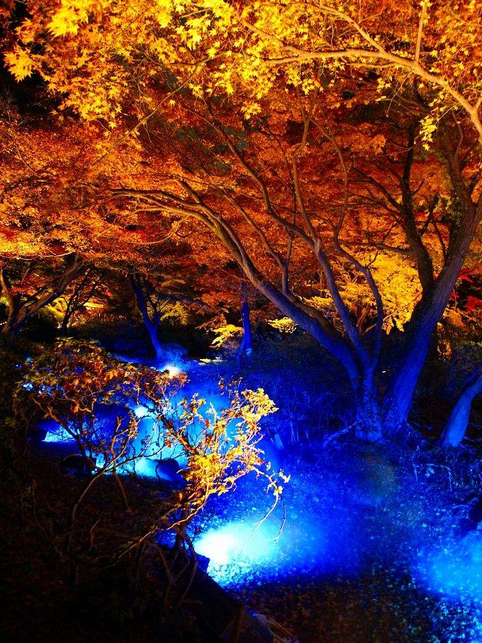 六義園の紅葉はライトアップも!