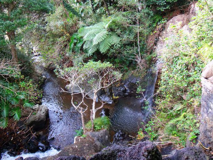 八丈島の温泉7 気分は亜熱帯ジャングルクルーズ・裏見ヶ滝温泉