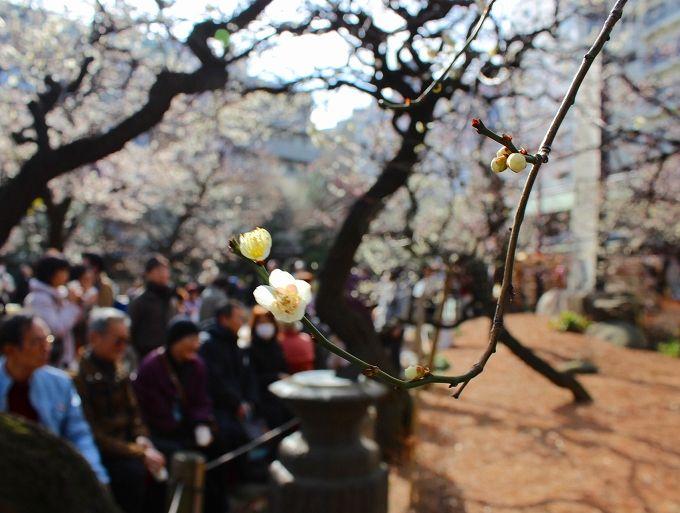 東京に春を告げる湯島天神梅まつりの賑わい