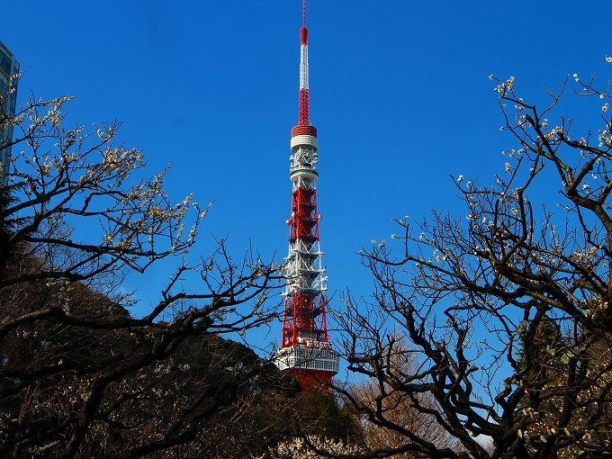 芝東照宮と桜・梅・紅葉で彩られる芝公園