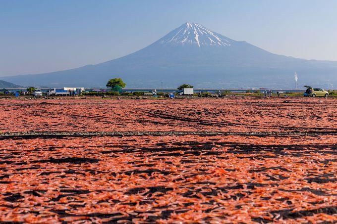 富士山と桜えび天日干し場の不思議な風景