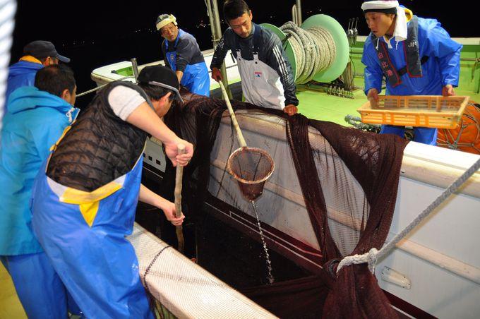 春と秋の夜に駿河湾で行われる桜えび漁