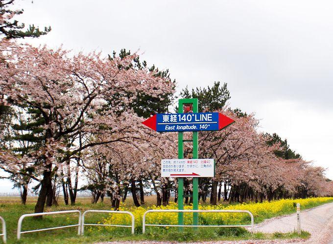 桜並木と菜の花ロードの東経140度をまたぐ時には、矢印の方角をチェック!