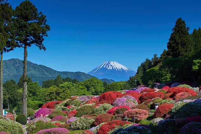 ツツジとシャクナゲ咲く「山のホテル」の庭園
