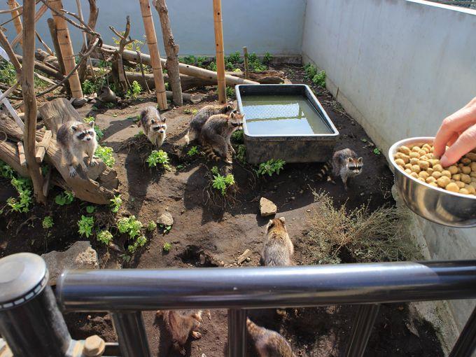 ゾウさんに餌やりができる!お鼻にタッチも!日立市かみね動物園