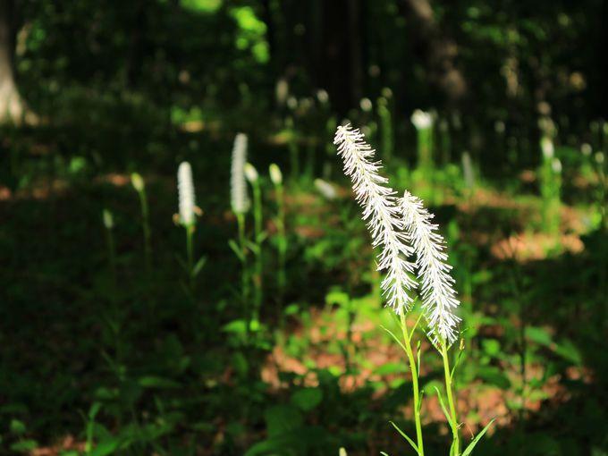 国営武蔵丘陵森林公園で花を見る楽しみを満喫して
