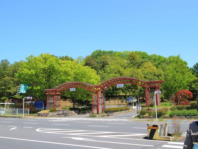 国営武蔵丘陵森林公園にも話題のネモフィラお花畑が!