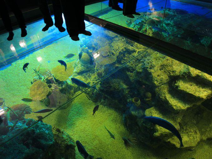 侮れない楽しさ「越前松島水族館」