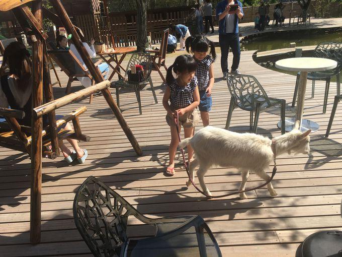 動物とふれあおう、子供も笑顔の「がけっぷちリゾート」