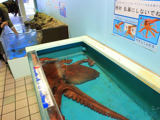 越前松島水族館ならエイやサメにタッチもできる