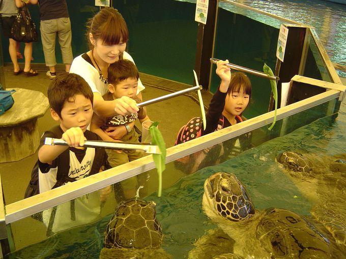 越前松島水族館の餌やりならここで