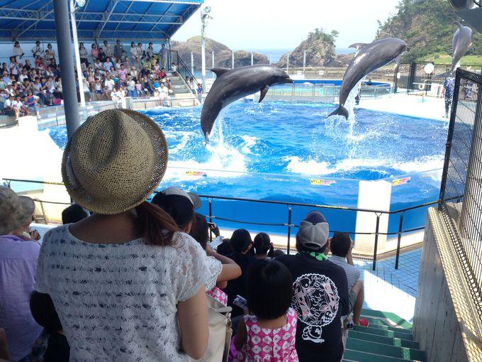 ペンギンと記念撮影!イルカとのふれあいも!