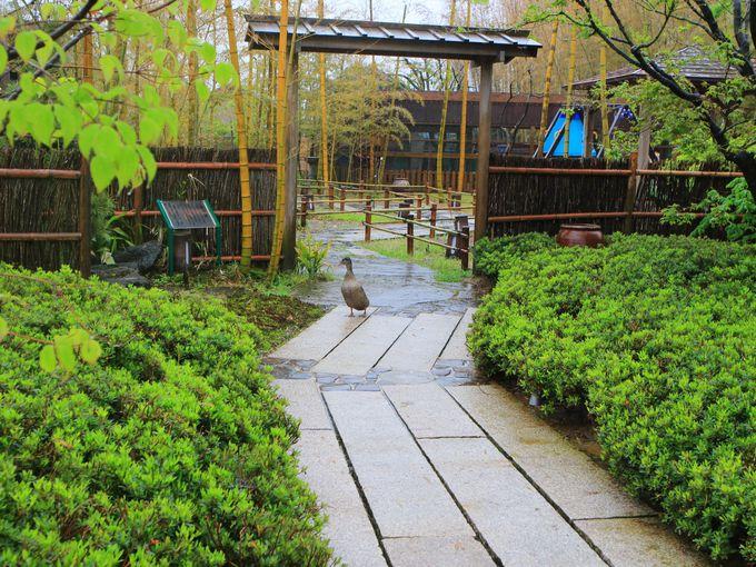 Nora(ノラ)はミニ動物園のある農園レストランと苺専門カフェ