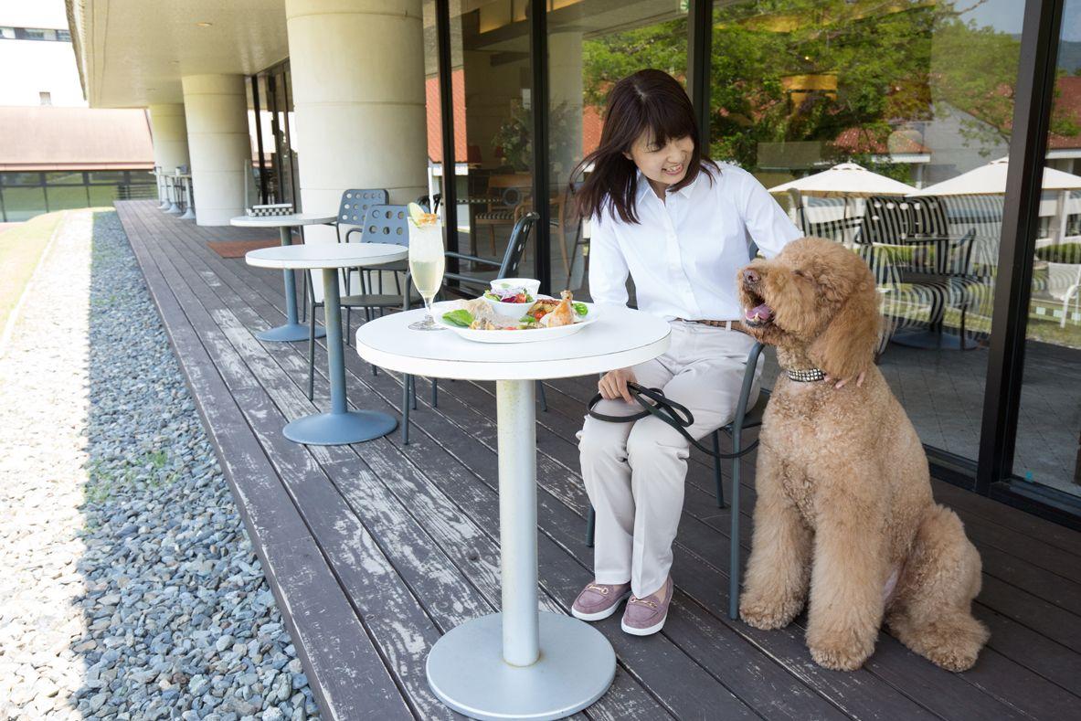 大型犬も可!愛犬と一緒に泊まれる箱根ハイランドホテル