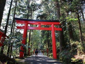 箱根神社参拝に使える!王道の元箱根半日観光モデルコース