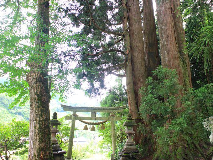 板ヶ谷八幡神社と八幡杉