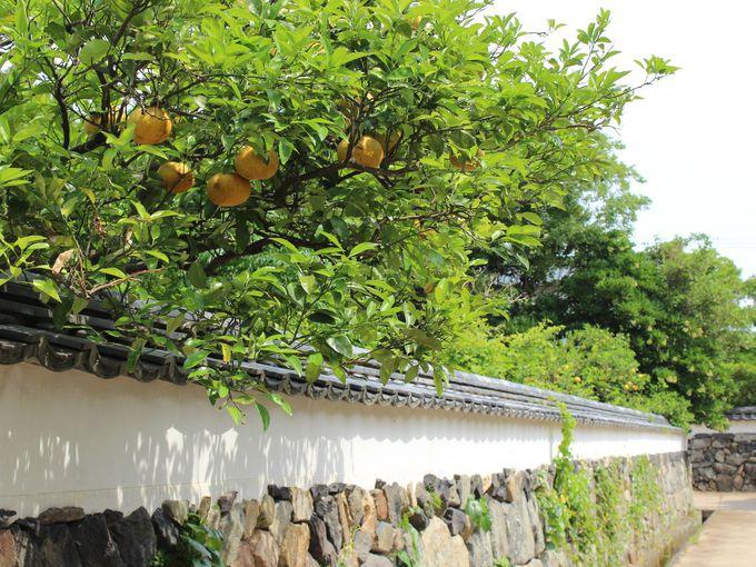 1日目午後:萩城下町散策と世界遺産の萩反射炉見学
