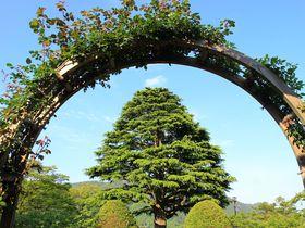 箱根強羅公園に行くなら!滞在時間別おすすめガイド