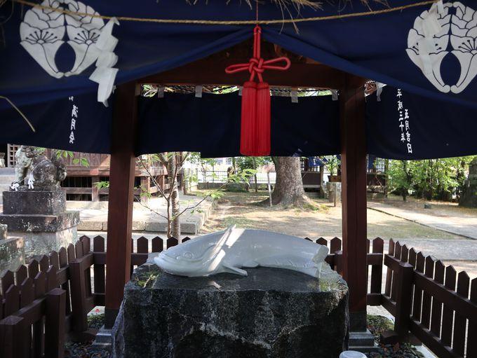 朝:嬉野温泉の豊玉姫神社は美肌祈願のパワスポ