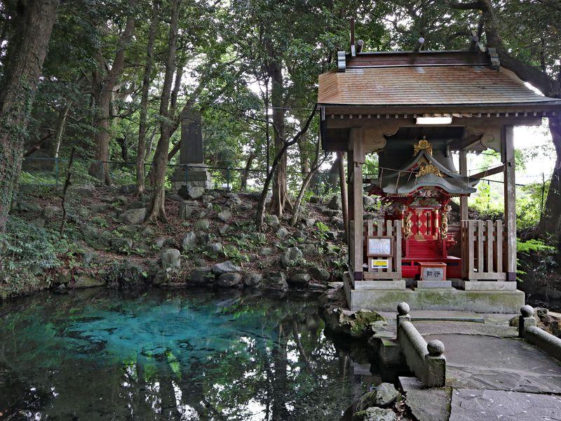 泉が森の美しい湧水