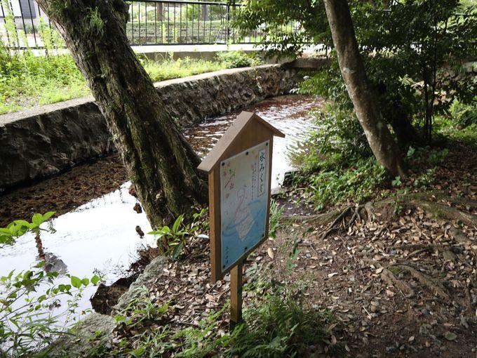 泉神社の水みくじで霊泉に触れて