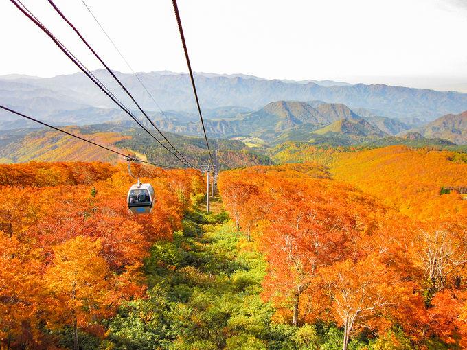 3日目午後:森吉山の紅葉はゴンドラで見に行こう!