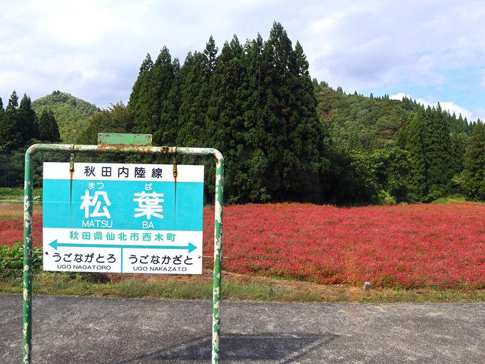 秋田内陸線の車窓を楽しむ