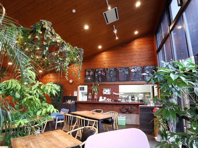植物園のカフェでハニトー!箱根湿生花園「森のカフェHAKONE」