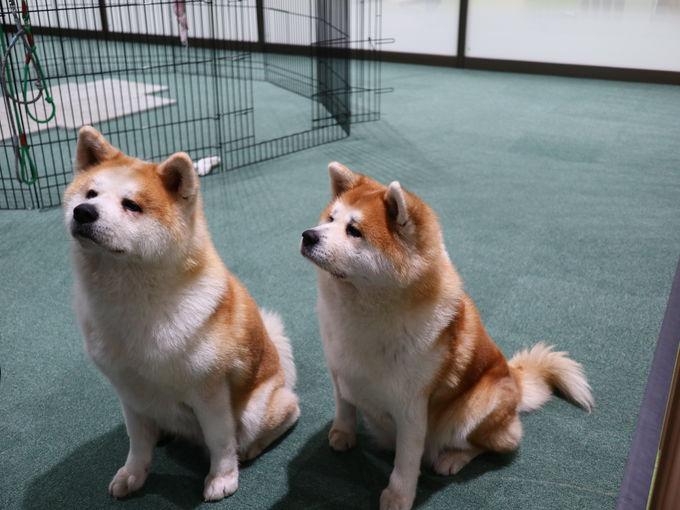 大館駅前の「秋田犬の里」