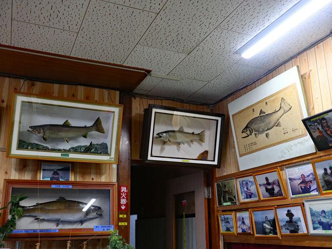 釣りのメッカ、でも釣りだけじゃない奥只見湖の「六方」