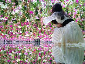 豊洲「チームラボプラネッツ」新作の庭園も!見どころガイド