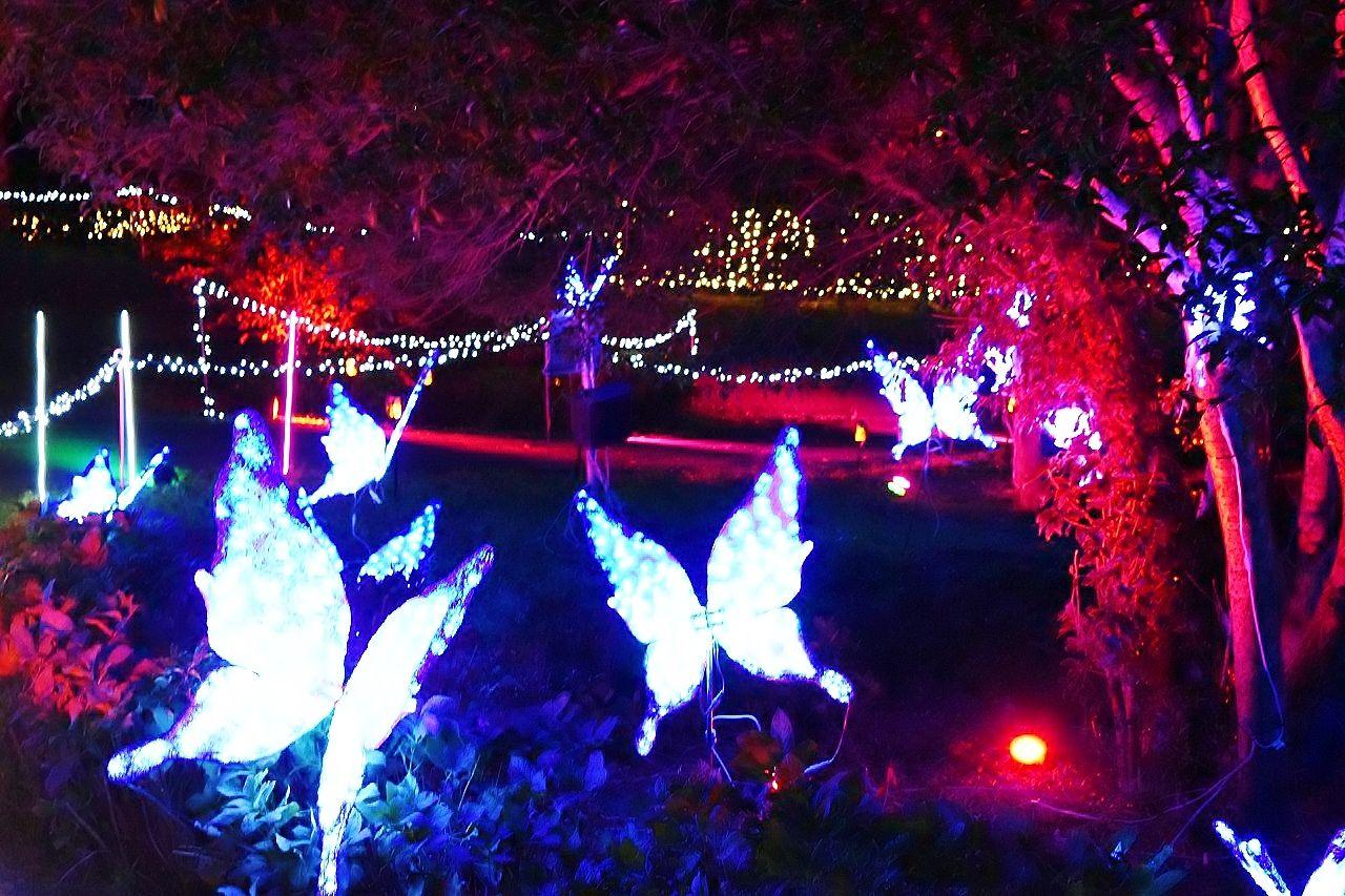 「光のお花見」や「光の動物園」で夜でもピクニック気分!